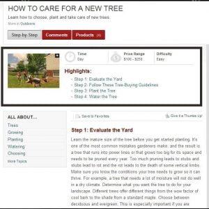 New Tree