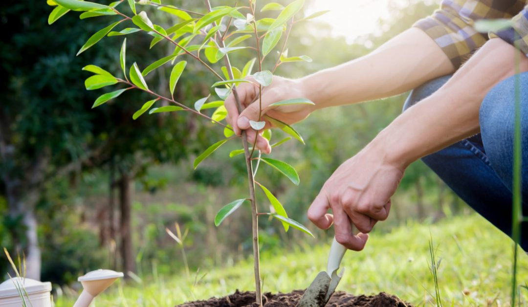 How You Can Take Care of Your Young Tree