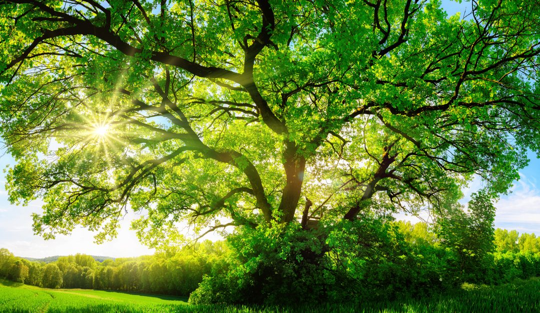 The Ecological and Environmental Importance of Trees