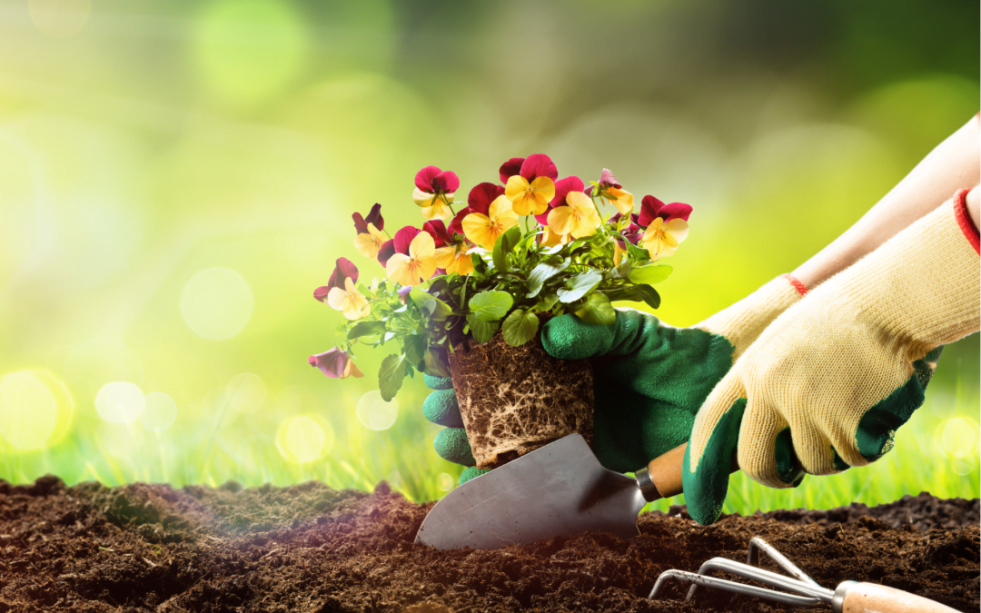 Ways in Which You Can Maximize Your Garden's Potential